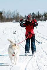 Cross Country Skiing South Lake Tahoe | Pet Friendly Activities in South Lake Tahoe
