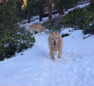Dog Friendly Vacation Rentals | South Lake Tahoe | Buckingham Luxury Vacation Rentals
